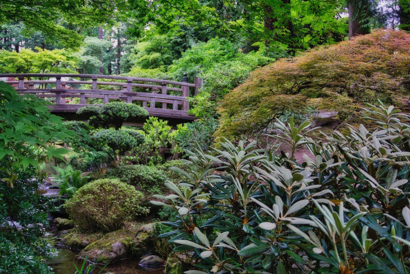 Footbridge in Japanese garden